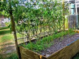 creative vegetable gardening creative idea florida vegetable gardening stunning design south