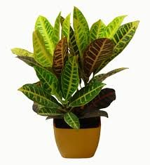 Home Interior Plants Home Design Indoor Plants Low Light Common Houseplants And Best