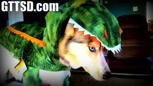 Halloween Costumes Husky Dog Dog Freezes Halloween Costume Frozen Shelby Husky