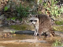 Oklahoma Wildlife images List of parks in oklahoma jpg