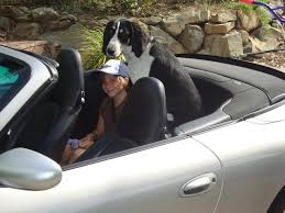 porsche 911 back seat back seat rennlist porsche discussion forums