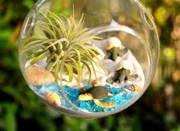 desk terrarium kit succulent glass planters office plants photos
