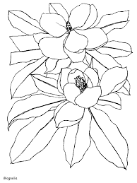 magnolia flowers coloring pages u0026 coloring book