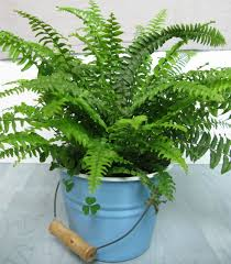 good low light plants low light indoor plants house plants that thrive in lower light