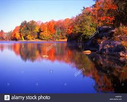 laurel lake lined colorful fall foliage autumn morning