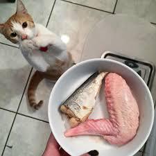 prey model raw pmr for cats perfectly rawsome