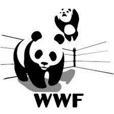 wwf panda wrestling parody wwf panda wrestling parody