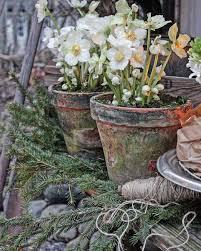 vibeke design instagram vibeke design pots and pansies pinterest gardens plants and