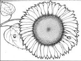 Great Sunflower Coloring Page Imagine Unknown Resolutions High Sunflower Coloring Page