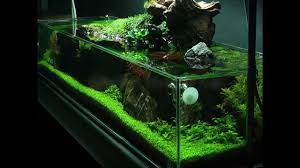 Green Machine Aquascape Simplicity Aquascape Preview 2 Full Video Coming Soon Youtube