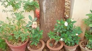 a bunch of ornamental plants