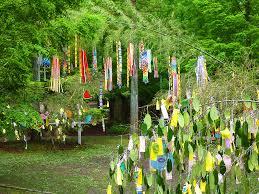 festival decorations 壁紙 七夕の笹飾りと短冊 神戸市立森林植物園 xga1024 768