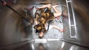 Dog Spider Halloween Costume Dog Dressed Spider Oasis Amor Fashion