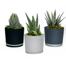 Indoor Tropical Plants For Sale - shop house plants at lowes com