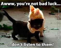 Cat Hug Meme - sometimes black cats just needs a hug fun cat pictures
