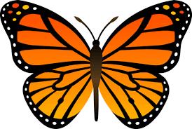 orange monarch butterfly vector free clip