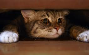 fluffy cat hiding under the bed cats free stock photos