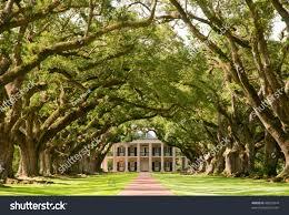 oak alley plantation hanging oak tree stock photo 48502444