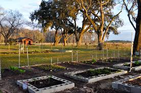 vegetable gardening in florida in february youtube