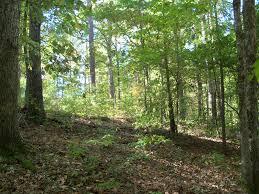 Alabama forest images Talladega national forest the alalandman blog page 2 jpg