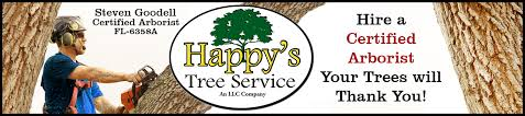 tree replacement pinellas county happy s tree service llc