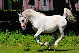 Are Horses Color Blind Andalusian Horses Everything You Need To Know About The Breed