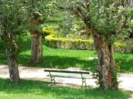 Benches In Park - images of top bench in park sc