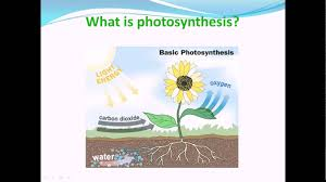 what is photosynthesis nutrition in plants science cbse class