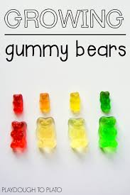 growing gummy bear science playdough to plato