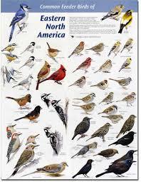 Backyard Birds Utah North Carolina Birds Identification Bing Images Wildlife