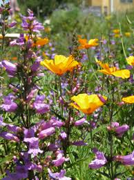 plants for native bees california native bee garden bringing back the natives garden tour