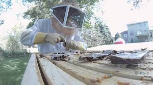 suburban beekeeping what to expect as a backyard beekeeper youtube