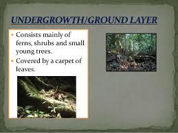 Dominant Plants Of The Tropical Rainforest - tropical rainforest