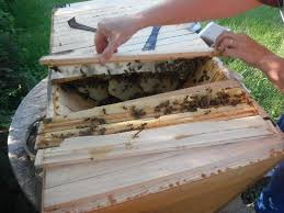 How To Build Top Bar Hive Winter In A Top Bar Hive