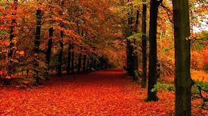 background fall wallpapersafari