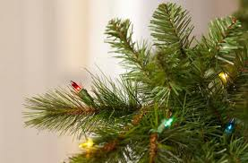 find all types of christmas trees at the home depot
