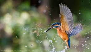 wildlife images Wildlife photography best wildlife images by max rinaldi photography jpg