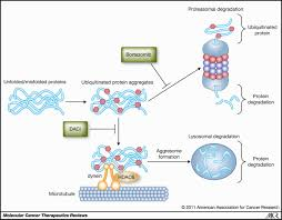 mechanism of action of proteasome inhibitors and deacetylase