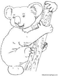 koala bear coloring page count the koalas puzzle and colouring page project dieren