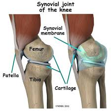Knees Anatomy Tibia And Patella Google Search Knee Anatomy Pinterest Anatomy