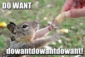 Squirrel Nuts Meme - funny squirrel memes nuts