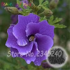 Cheap Flower Seeds - 50 pcs giant hibiscus flower seeds chinese cheap flower hibiscus