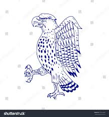 drawing sketch style illustration sharpshinned hawk stock vector