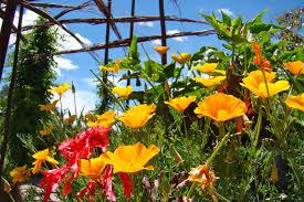 santa fe botanical garden awarded prestigious imls grant