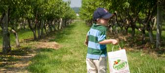 where to go apple picking with kids near boston mommy nearest