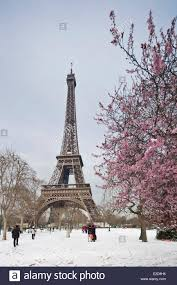 france paris the eiffel tower and cherry blossoms in champs de