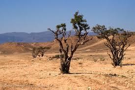 travel pictures gallery oman 0044 sparse desert vegetation