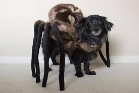 Spider Dog Halloween Costume Mk Soft Product