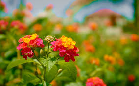 beautiful flowers pic