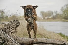 comment empecher chien de monter sur le canapé comment éviter que mon chien saute sur les gens